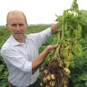 Straightforward harvest for seed potatoes