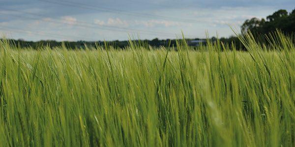 Latest varieties 'meet complex agronomic challenges'