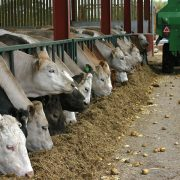 MPs warn of critical shortage in veterinary inspectors