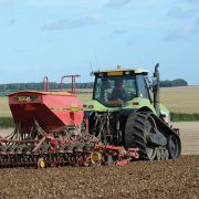 Varietal choice can boost later drilled winter wheat