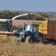 Order early to secure preferred maize seed