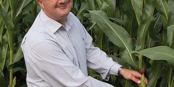 How to make full use of 2020's high quality maize