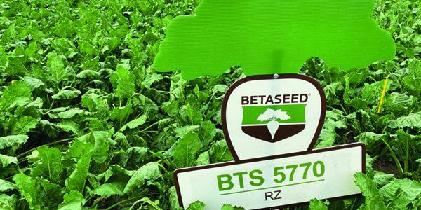 New varieties added to sugar beet list