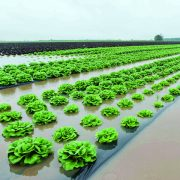 Farmers dogged by impact of extreme weather – report
