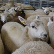Concern over government plan to ratchet up animal welfare