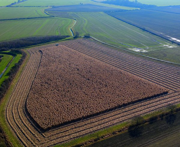 Finance agreement set to boost miscanthus crops