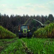 How under-sowing maize paves way for better harvest performance