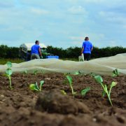 Farmers face long delays for harvest workers this summer
