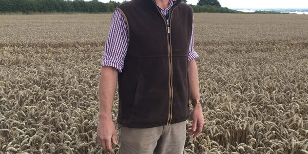 'Cleanest' wheat cuts input costs on Norfolk estate