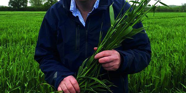 Hybrid barley could strike chord on heavy land