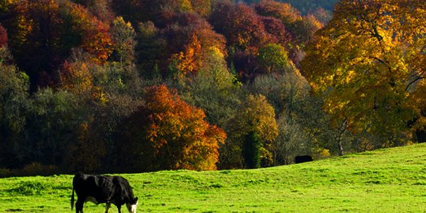 Woodland creation grants now available