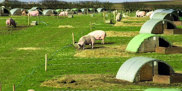 Pig industry posts further reductions in antibiotics