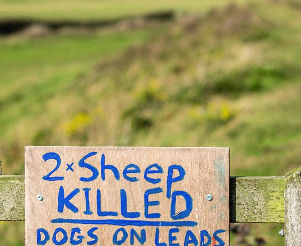 Plans to tackle dog attacks on livestock 'could go further'