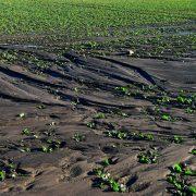 Soil degradation 'poses threat to human life'