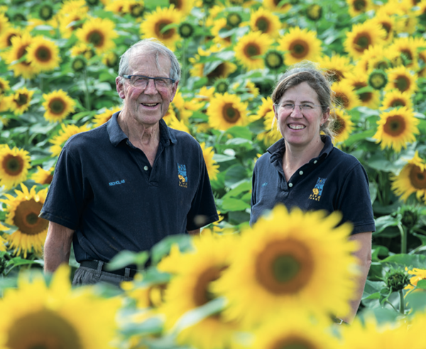 Farm sunflowers generate £2m for wildlife charity