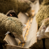 How supplements can get more from your forage