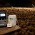 Restrain Ethylene film shows success of long-term potato storage